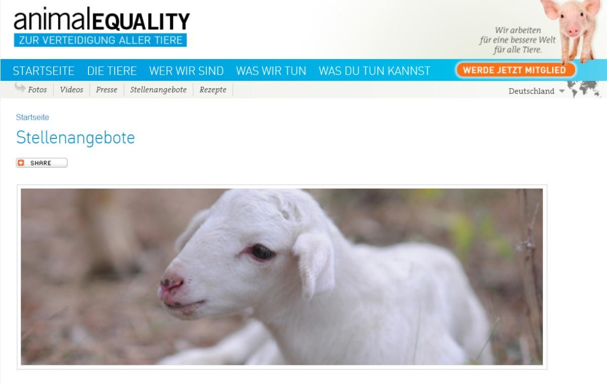 Bundesfreiwilligendienst bei Animal Equality