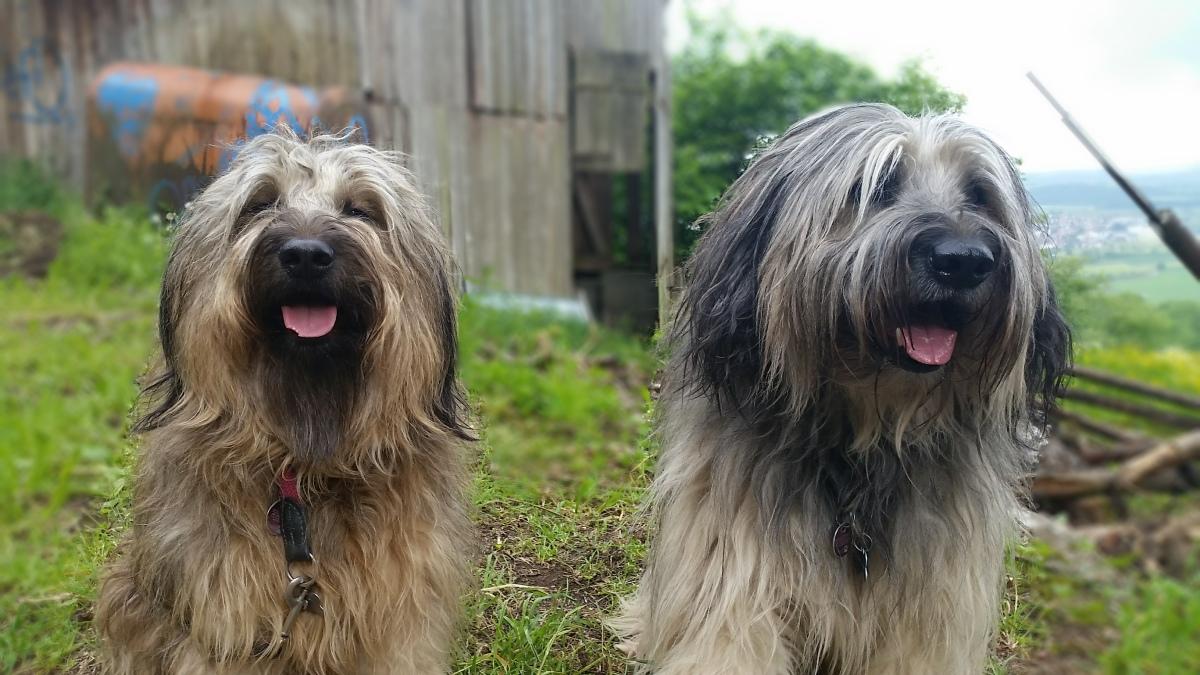 So schön ist unsere Heimat - Wandern mit Hund
