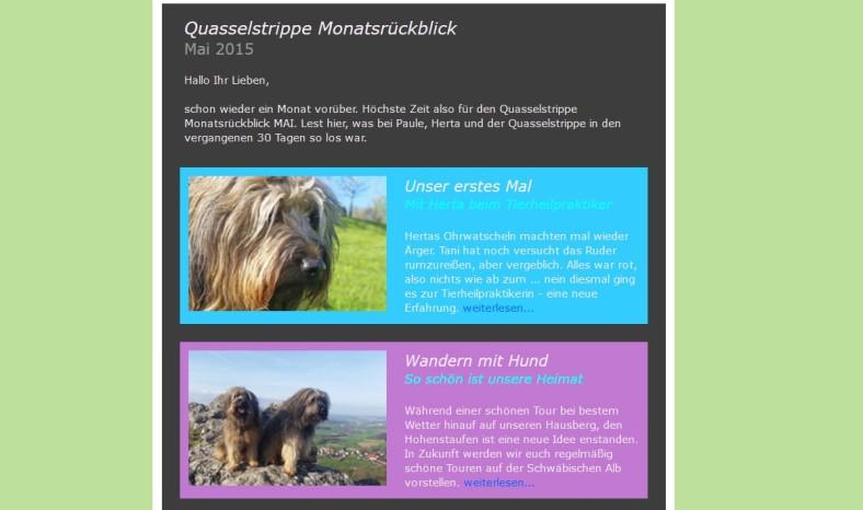 Bild Quasselstrippe Newsletter