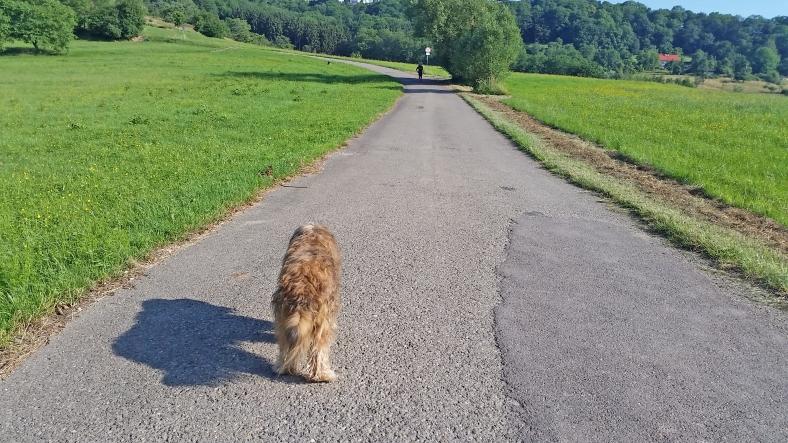 herta und die jogger