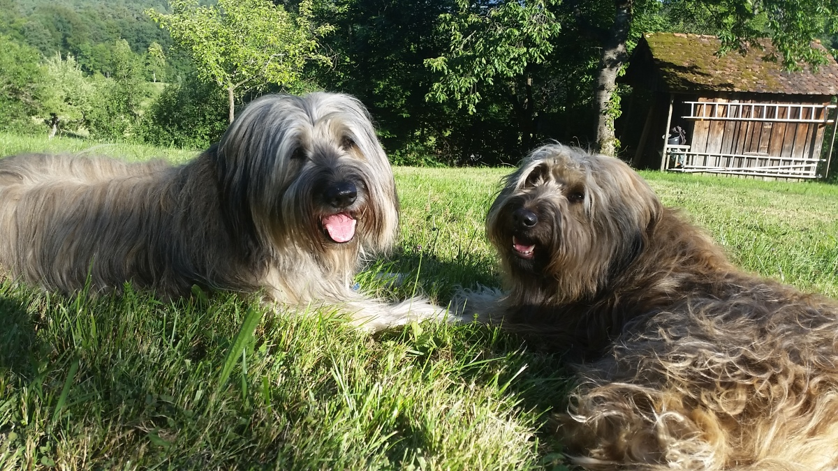 Hunde – zwei sind keiner zuviel!