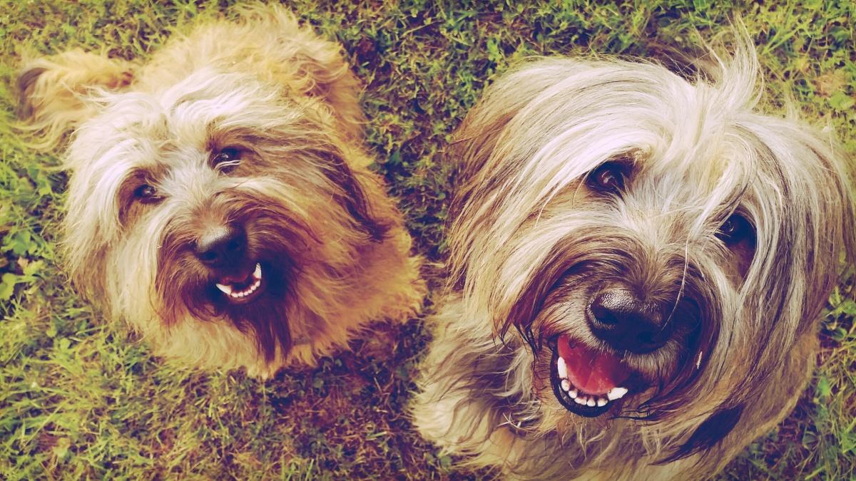 Seelenhunde – nie mehr ohne Hund!