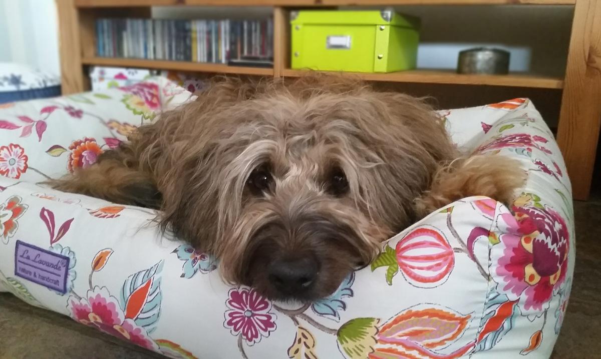 Lieblings-Hundebetten: wie Hund sich bettet…