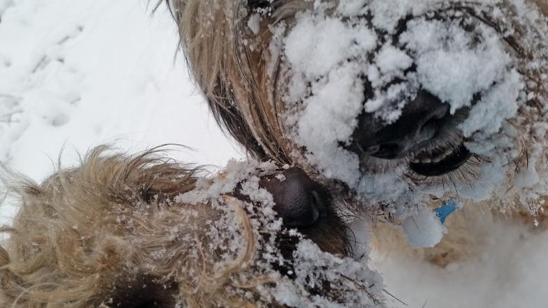 Beitragsbild_Schnee