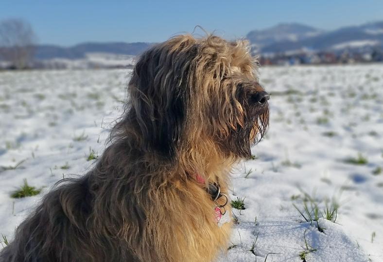 Schnee_Beitragsbild2