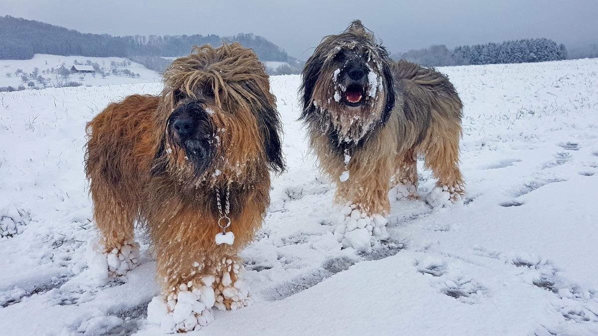 Mein Leben mit Hund : die Vorweihnachtszeit