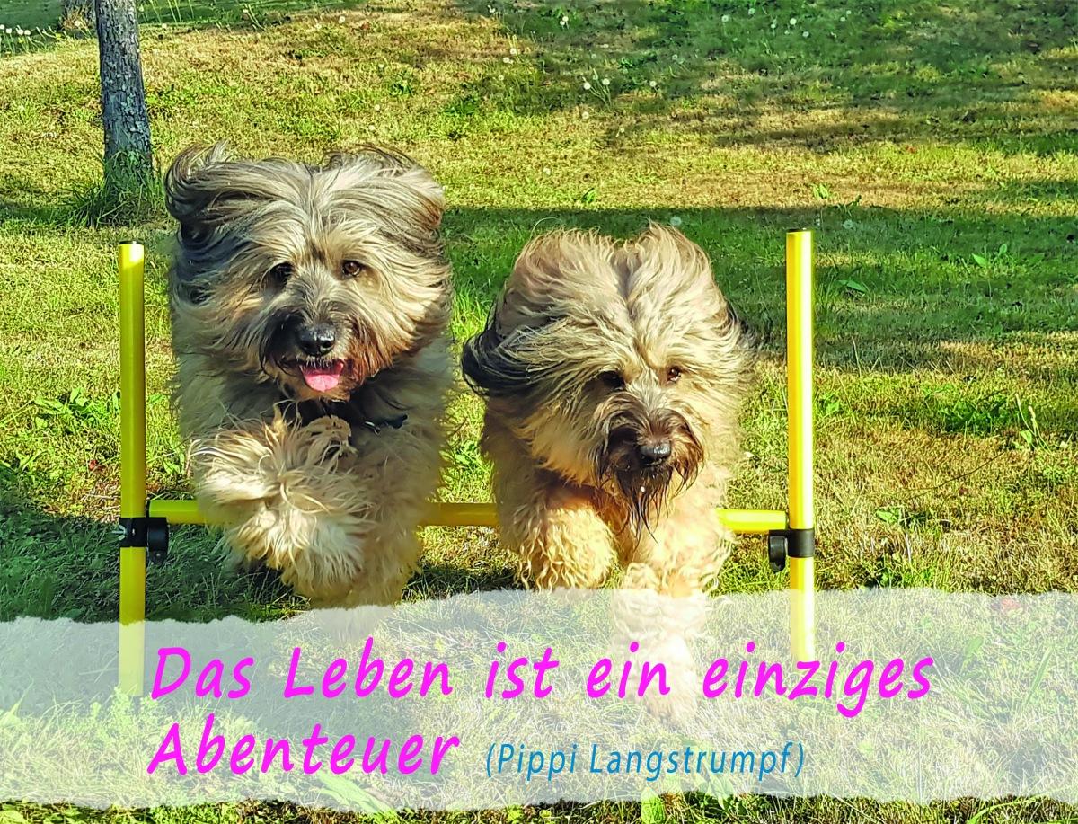 Paule-und-Herta-Kalender 2019